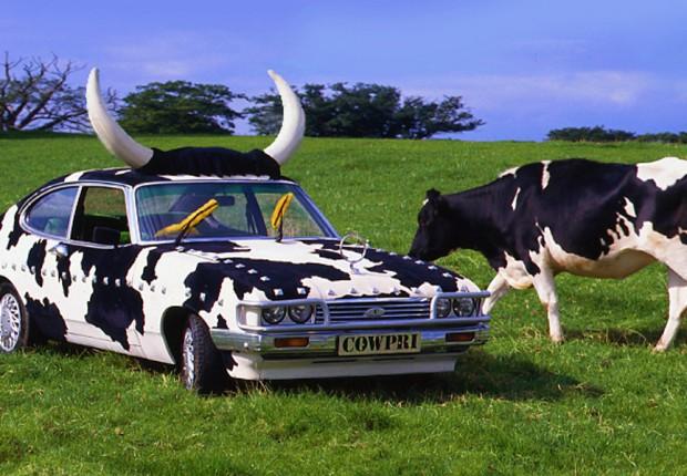 Anne Tilby cartoon_wild cowpri grazing