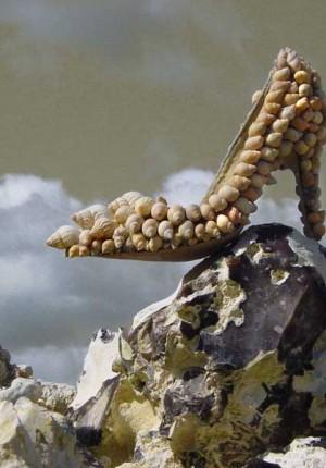 Anne Tilby shell shoe on rock
